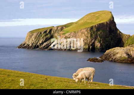 Scottish coastline landscape in Shetland islands. Scotland. UK ...