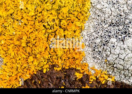 rocks with lichens, United Kingdom, Scotland, Shetland Islands, Fair Isle - Stock Photo