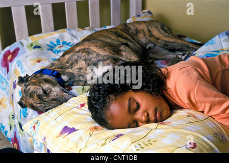 6-8 years old girl child asleep bed with adopted brindle greyhound dog. with collar  close up MR  side front high - Stock Photo