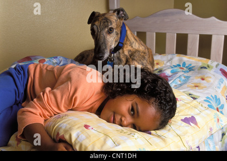 Multi ethnic  6-7 year old girl child sleeping in bed with adopted brindle greyhound dog with collar . close up - Stock Photo