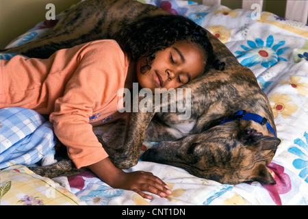 Multi ethnic 6-7 year old girl child asleep in bed with adopted brindle greyhound dog with collar close up  top - Stock Photo