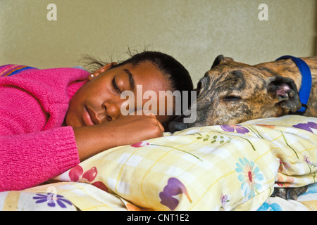 10-11-12 year old girl asleep in bed with dog adopted brindle greyhound dog  with collar close up low below side - Stock Photo