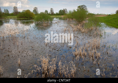 temporary spawning pool for treefrogs and firebelly toads, Germany - Stock Photo