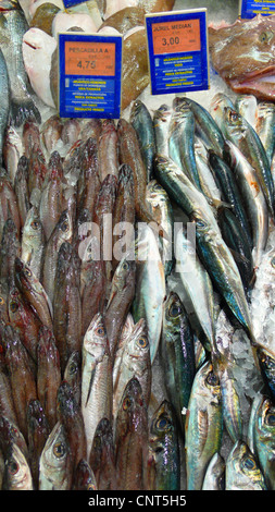 edible fishes from USA on a market in Alcudia, Spain, Balearen, Majorca, Alcudia - Stock Photo