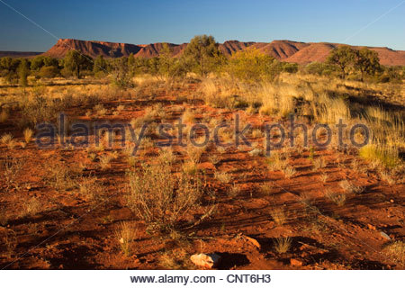 Kings Canyon - red earth, bushland and by sun red ablaze rim cliffs of Kings Canyon in late evening, Australia, - Stock Photo