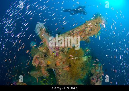 A Japanese Maru warship sunk during World War 2, Morovo Lagoon, Solomon Islands. - Stock Photo