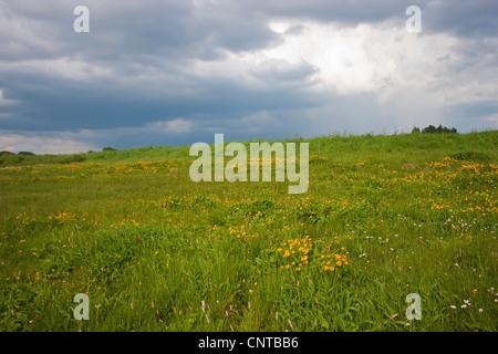 marsh marigold (Caltha palustris), blooming in a marsh meadow, Germany, North Rhine-Westphalia, Siegerland, Lipper - Stock Photo