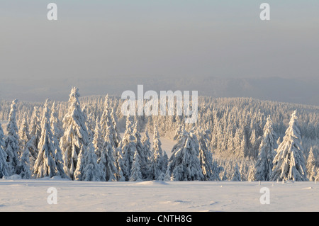 view over snow covered sprouce forest in the sunshine, Germany, North Rhine-Westphalia, Hochsauerland - Stock Photo