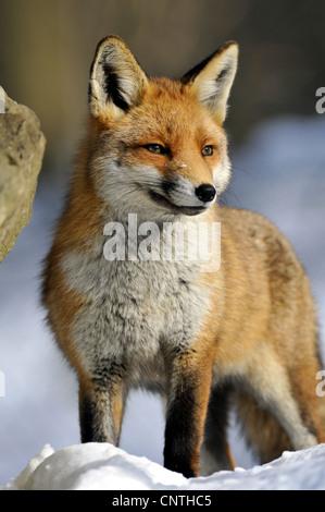 fox in deutschland schauen