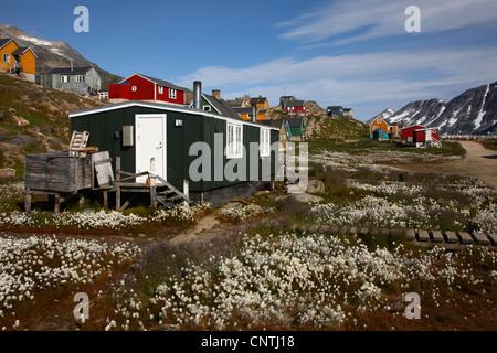 wooden houses in cotton-grasses, Greenland, Ammassalik, East Greenland, Kuummiit - Stock Photo