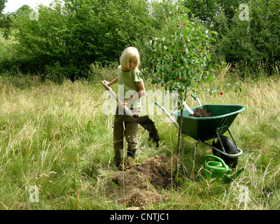 young boy planting a cherry tree in a meadow is filling the hole with nutrient-rich soil, Germany - Stock Photo
