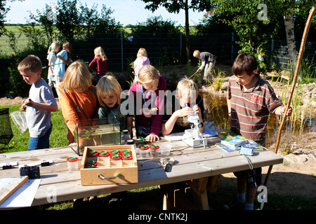 primary school pupils watching animals in an aquarium and under a microscope caught in the self-built pond in the - Stock Photo