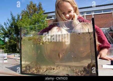 primary school pupils watching animals caught in the self-built pond in the school garden in an aquarium - Stock Photo