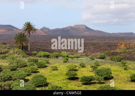 varied volcanic mountain scenery, Canary Islands, Lanzarote - Stock Photo
