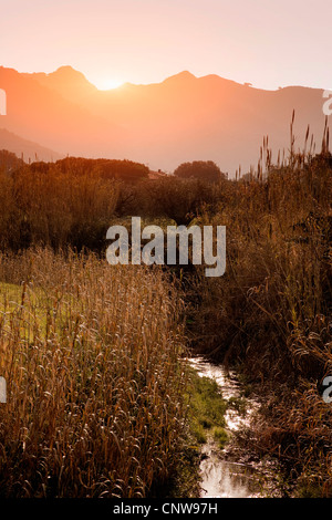 Tall grass growing on rural creek - Stock Photo