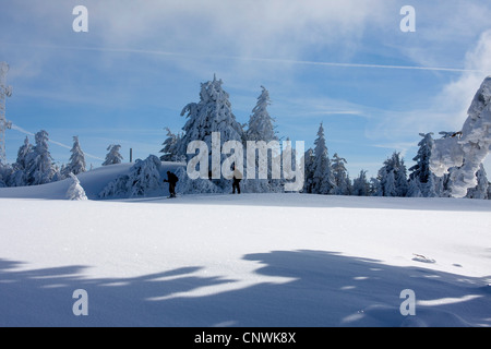 two wanderers in front of grove in a snow covered landscape at the Schwarzwaldhochstrasse, Germany, Baden-Wuerttemberg, - Stock Photo