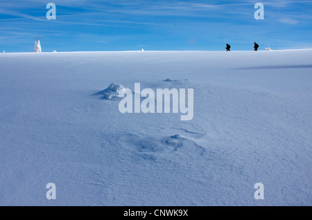two wanderers on a snow-covered plain with single trees at the Schwarzwaldhochstrasse, Germany, Baden-Wuerttemberg, - Stock Photo