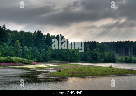 succession at a lake at midsummer low water, Germany, North Rhine-Westphalia, Moehnesee - Stock Photo