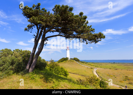 Scotch pine, scots pine (Pinus sylvestris), askew meadow landscape with lighthouse and sea in the background, Germany, - Stock Photo