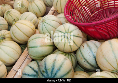Charentais melone (Cucumis melo var. cantalupensis), at the weekly market; special sort of the Cantaloupe, France, Languedoc-Roussillon, Saint Gilles