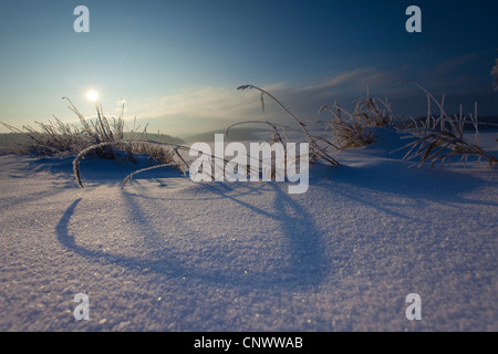 hoar frost covered grasses in snow at sunrise, Germany, Saxony, Vogtlaendische Schweiz - Stock Photo