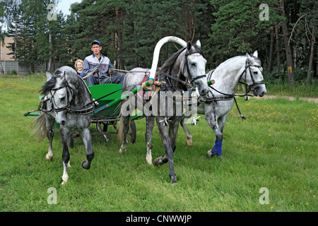 Russian traditional horse team driving troika, Russia - Stock Photo
