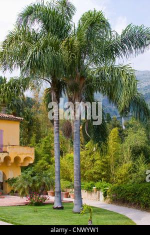 Royal palm roystonea regia palm tree avenue near for Jardin west palm