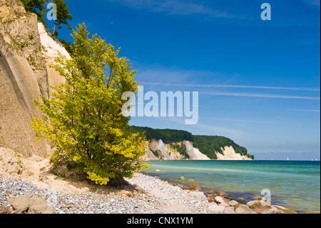chalk cliffs in Jasmund National Park, Germany, Mecklenburg-Western Pomerania, Ruegen, Jasmund National Park - Stock Photo