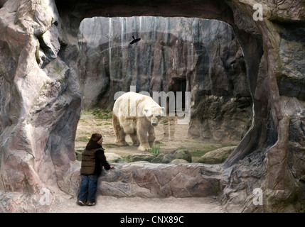 polar bear (Ursus maritimus), child standing at polar ice enclosure - Stock Photo