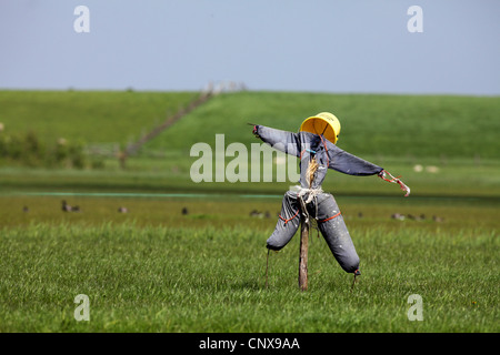 scarecrow on a field, Netherlands, Texel