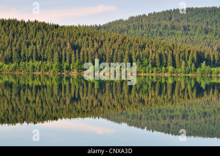 coniferous forest mirroring in Schluchsee, Germany, Baden-Wuerttemberg, Black Forest - Stock Photo