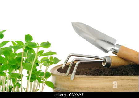 Young impatiens flowers and gardening tools, young plants - Stock Photo