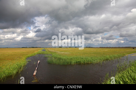 rain clouds over meadows of Workumer Waard, Netherlands, Frisia - Stock Photo
