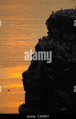 Long Anna, Lange Anna, at sunset, Germany, Schleswig-Holstein, Heligoland - Stock Photo