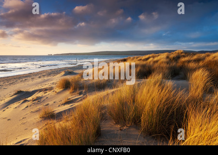Windswept sand dunes on the beach at Studland Bay, with views towards Old Harry Rocks, Dorset, England. Winter (February) - Stock Photo
