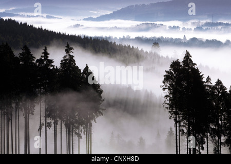 morning mist in the valleys of Arnsberg Forest , Germany, North Rhine-Westphalia, Sauerland, Meschede - Stock Photo