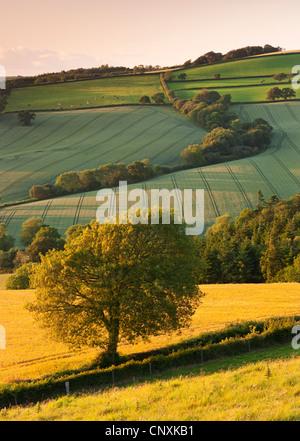 Rolling farmland in summertime, Devon, England. Summer (June) 2011. - Stock Photo