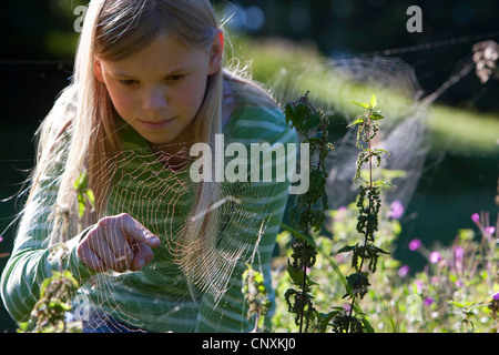 fourspotted orbweaver (Araneus quadratus), girl pointing on at a spider in web, Germany - Stock Photo