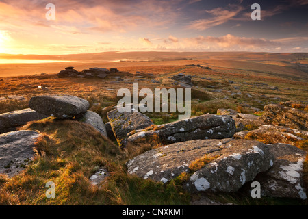 Dawn at Littaford Tor, Dartmoor, Devon, England. Autumn (October) 2011. - Stock Photo