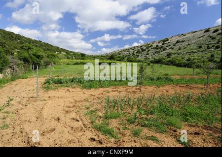 field in karst landscape, Croatia, Pag - Stock Photo