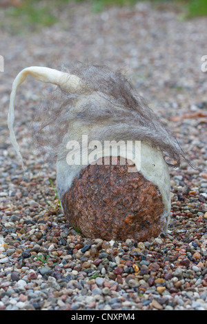 'felt stone troll' serving as garden decoration: natural stone equipped with caps of felted wool is standing on - Stock Photo