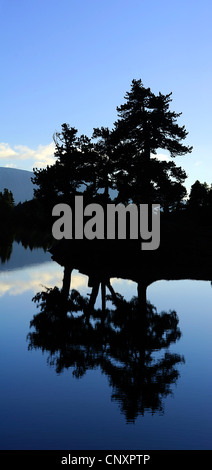 reflections of the silhouettes of conifer trees at the shore of Lake Achard in the Belledonne mountains, France - Stock Photo