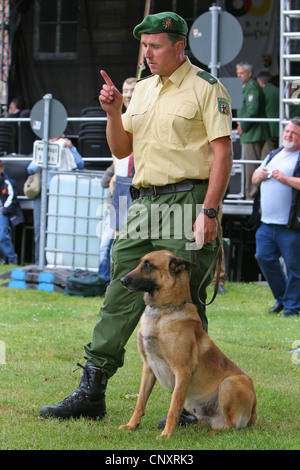 Malinois (Canis lupus f. familiaris), police dog sitting on the lawn scenting at a public demonstration at the dog - Stock Photo
