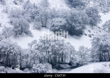 Snow covered trees in The Punchbowl, Exmoor, Somerset, England. Winter (January) 2012. - Stock Photo
