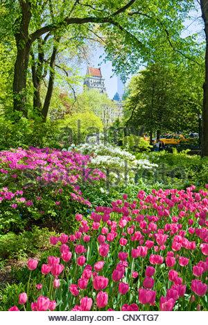 Central Park in spring season. - Stock Photo