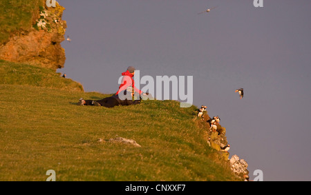 Atlantic puffin, Common puffin (Fratercula arctica), tourists watching watching a group at steep coast, Iceland, - Stock Photo