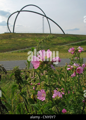 musk mallow, musk cheeseweed (Malva moschata), blooming on stockpile Hoheward with the so called observatorium in - Stock Photo