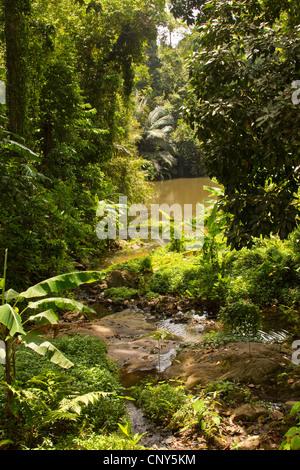 jungle virgin rainforest Thailand Phuket area forest rain ...