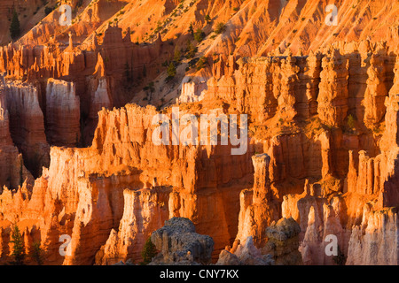Hoodoos seen from the Sunset Point in the morning, USA, Utah, Bryce Canyon National Park, Colorado Plateau - Stock Photo