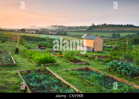 Raised beds on a rural allotment plot on the outskirts of the Mid Devon village of Morchard Bishop, Devon, England. - Stock Photo